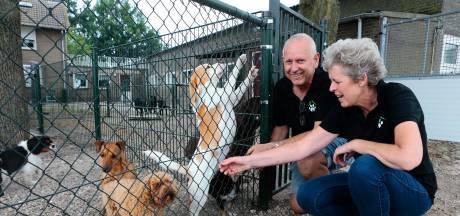 Hondenpension in coronatijd: 'Eerst regende het annuleringen, nu stromen de boekingen binnen'