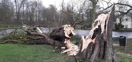 Bomen geven zich gewonnen tijdens januaristorm in de Bommelerwaard