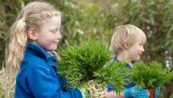 Een gezonde tuin in het voorjaar? Begin er nu al aan