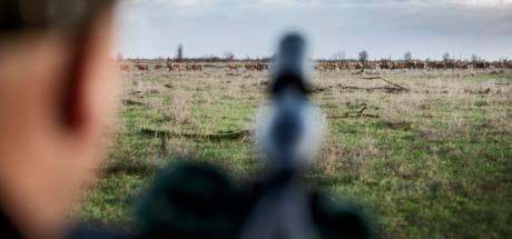 Dubbel zo veel jagers om herten Oostvaardersplassen af te schieten