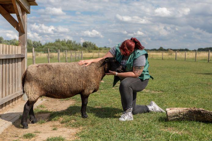 Landerij De Park zoekt vrijwilligers, onder meer voor het verzorgen van de dieren op de kinderboerderij.