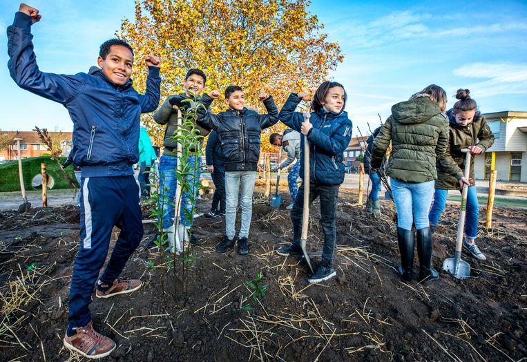 Leerlingen van groep 8a van Basisschool de Optimist in Almere planten een boom voor het Tiny Forest op het schoolplein.  Beeld Raymond Rutting / de Volkskrant