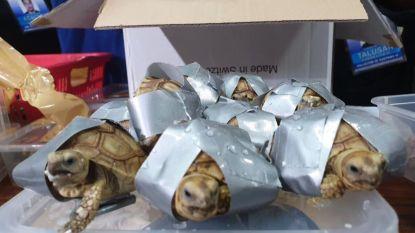 Filipijnse douane vindt 1.500 levende schildpadden in bagage