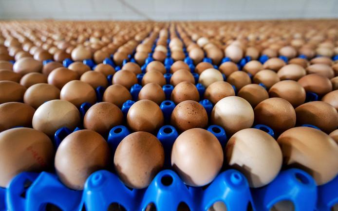 Doorraad eieren met een te hoge waarde aan giftige stoffen bij de Puttense pluimveehouder Helmus Torsius. Alle eieren van zijn twintigduizend biologische kippen worden vernietigd.