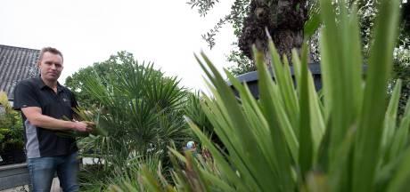 Peperdure bomen uit Achterhoekse tuinen geroofd: 'Het is een plaag'