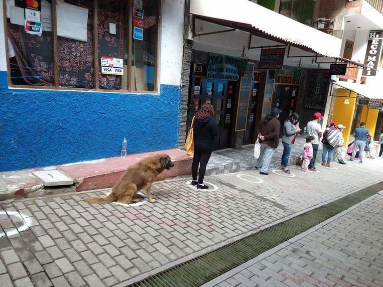 Hond wacht in rij voor Peruviaanse supermarkt.