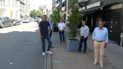 """Bomen vervangen deel parkeerplaatsen in Tolpoortstraat, handelaars weten van niets: """"Meer groen is goed, maar parkeren moet mogelijk blijven"""""""