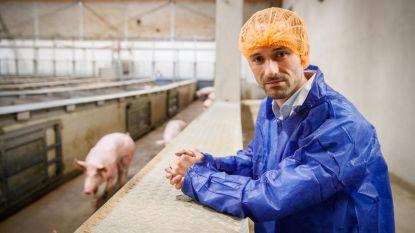 Zaakvoerder slachthuis moet voor rechter komen, Animal Rights en GAIA reageren tevreden