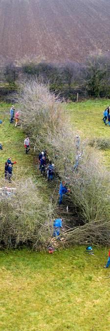 Meer drukte in Maasheggen door Unesco-erkenning