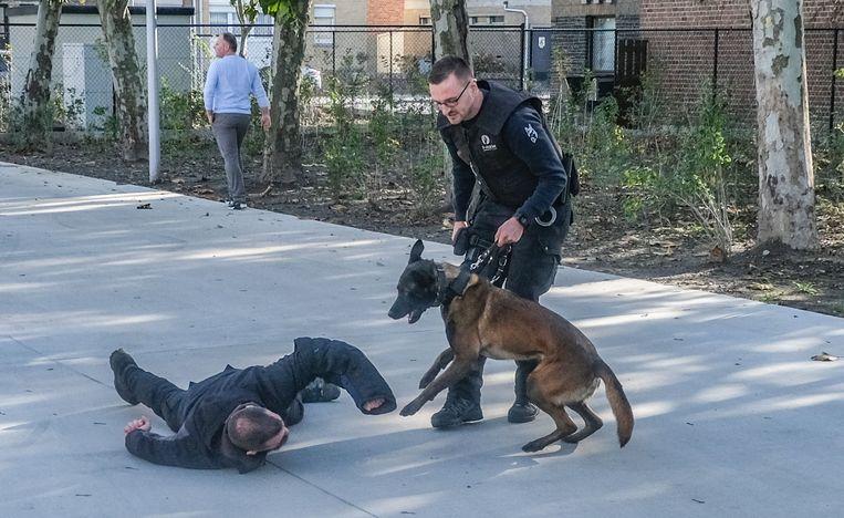 Met de hulp van een politiehond wordt een verdachte na een fout gelopen verkeerscontrole ingerekend.