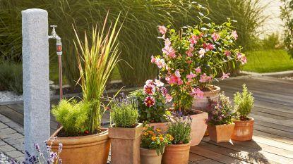 Besteed jij ook zoveel tijd aan je terrasplanten? De verzorging kan een pak efficiënter
