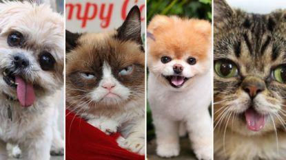 Beroemd hondje Marnie is overleden: ook van deze bekende internetdieren moesten we afgelopen jaar afscheid nemen