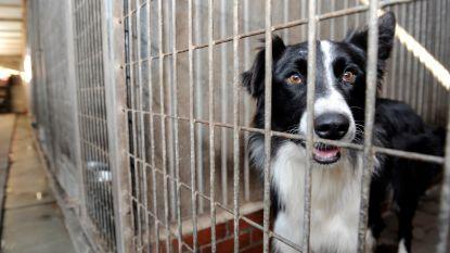"""Twintig verwaarloosde honden in beslag genomen: """"Ze liepen rond in eigen uitwerpselen en urine"""""""
