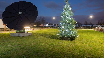 Dit is de meest ecologische kerstboom van Limburg
