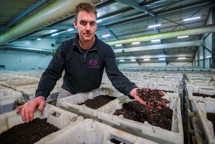 Michel van der Werff, mede-eigenaar van The Dutch Nightcrawlers in Almkerk, heeft altijd 25.000 kilo wormen op voorraad. De meeste wormen gaan naar Walmarkt in Amerika.