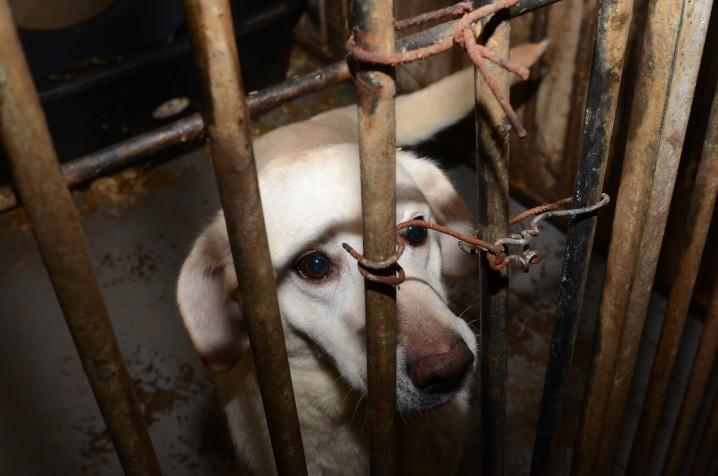 Honderd honden in beslag genomen bij hondenfokker Lettele