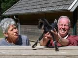 Lief! Verstoten geitje Truus vertroeteld door echtpaar in Neede