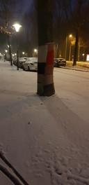 Zelfs de bomen hebben het koud in Eindhoven.