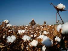 Zijn onze T-shirts gemaakt door Oeigoerse dwangarbeiders? Niemand die het zeker weet