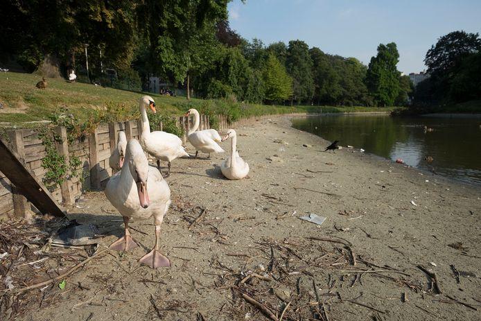 Een droge vijver: een vertrouwd beeld in het Antwerpse Stadspark