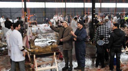 """Na verbod op onverdoofd slachten in Vlaanderen vindt ook Nederland verandering noodzakelijk: """"Offeren van dieren moet verboden worden"""""""