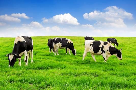 De dieetregel van Gundry: alleen vlees eten van koeien die gras eten.