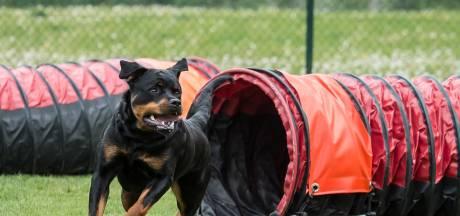 Omwonenden blijven zich verzetten tegen hondencentrum in Halsteren