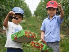 Flinke smak geld FruitDelta Rivierenland voor nieuwe initiatieven