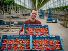 Jan van Genderen kweekt 5 miljoen kilo aardbeien per jaar. 'Ik ben zelf een soort zomerkoninkje'