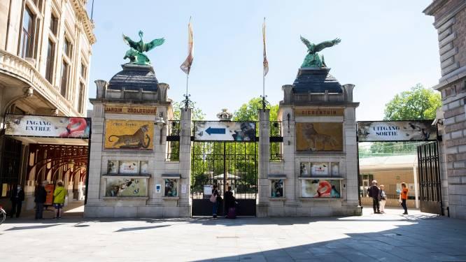 Zoo en Planckendael blijven open, maar concertreeks Zoo La La is afgeslankt tot één avond