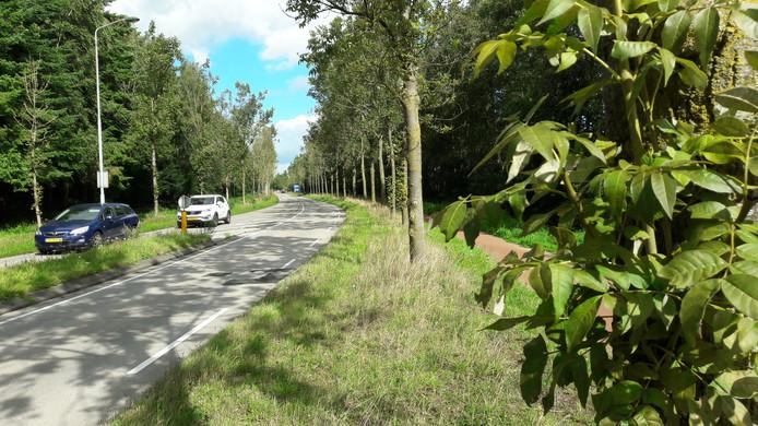 Langs de Akkerweg in Moergestel moeten 162 bomen om. De essentaksterfte noopt de gemeente Oisterwijk daartoe.