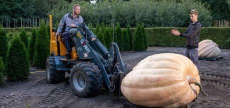 Weegt deze pompoen uit Wezep meer dan 510 kilo? Dan verbreekt Gerjan Puttenstein zijn eigen record