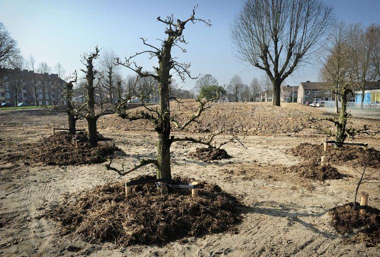 Op de plaats waar flats zijn gesloopt zijn fruitbomen geplant. Beeld Marcel van den Bergh