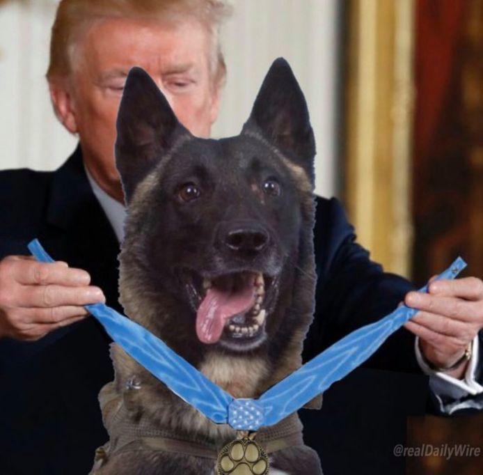 De gemanipuleerde foto van herdershond Conan die door Trump een medaille krijgt omgehangen.