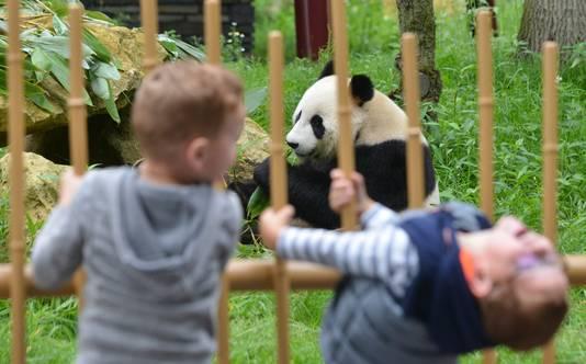 Het publiek komt heel Nederland zelfs uit het buitenland om deze bijzondere dieren te bekijken.