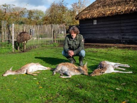 Drie dode herten in korte tijd: 'Alles wijst op vergiftiging'