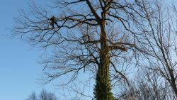 Man wil boom snoeien, maar krijgt gevaarte op zich en overlijdt