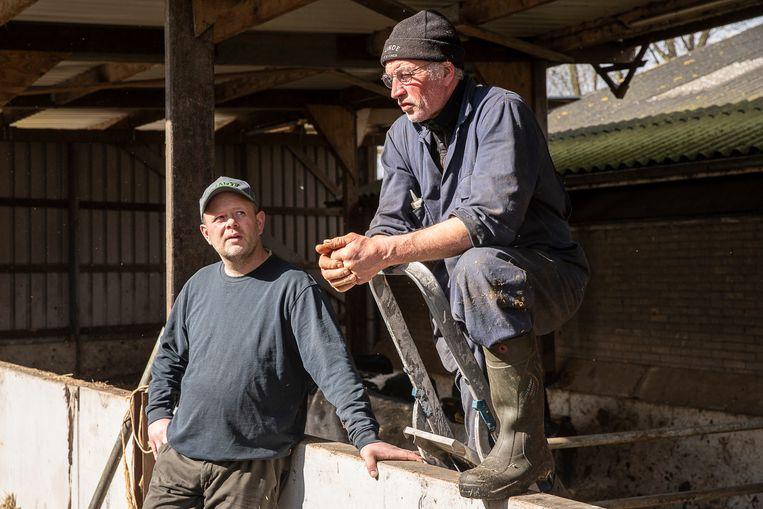 Gerben Engwerda (met muts) en zijn opvolger Tjomme Wijtsma op de boerderij nabij het Friese Tytsjerk. Beeld Harry Cock / de Volkskrant