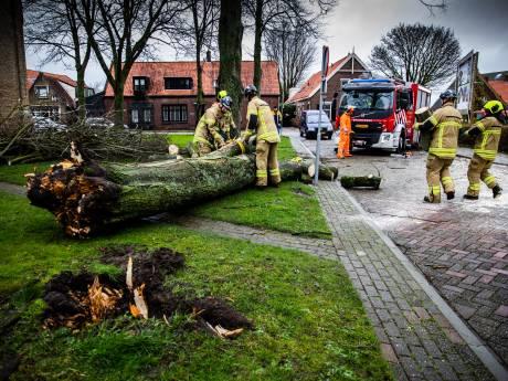 Behoorlijk wat schade tijdens derde stormweekend op rij: Veel omgewaaide bomen door zware windstoten