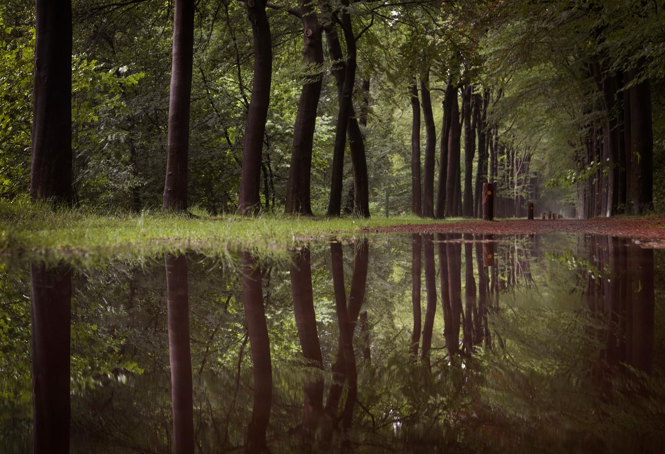 Prachtige bomen in Sparrenrijk in Boxtel. Buurgemeente Sint-Michielsgestel laat het planten van nieuwe bomen even met rust door al het gedoe met de strenge regels voor PFAS.