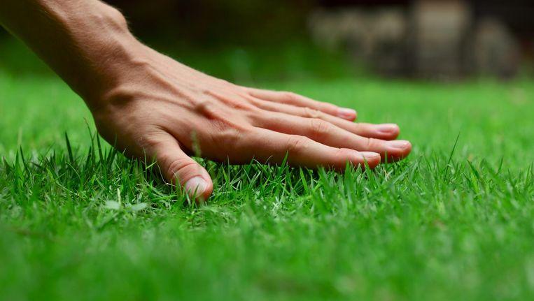 Behoefte aan groene vingers? Dan ben je op 9 juni in West aan het juiste adres Beeld Shutterstock