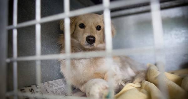 Italiaanse vrouw krijgt betaald verlof om voor zieke hond te zorgen