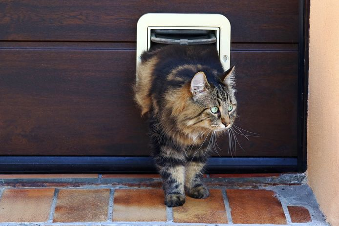 Katten ongecontroleerd naar buiten laten gaan, is illegaal.
