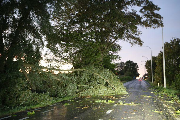 Een omgewaaide boom op de Hannuitsesteenweg zorgde voor een gevaarlijke verkeerssituatie