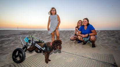 VIDEO Poedeltje liep rugletsel op maar heeft nu een rolstoel: Lucky kan weer 'op stap'