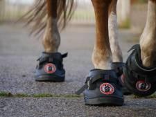 Paarden op schoenen. Op maat gemaakt vanuit Reek