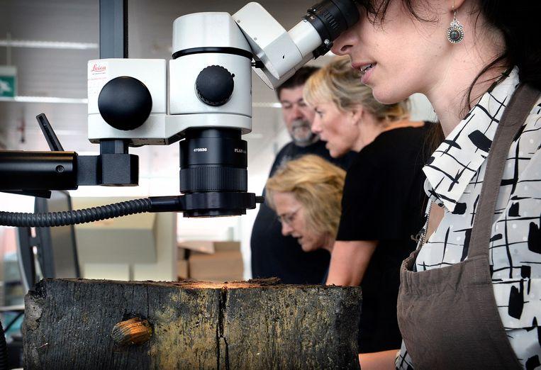 Microscopisch onderzoek om de grootte van de jaarringen van het hout op te meten. Beeld Marcel van den Bergh