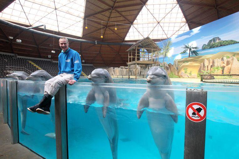 De dolfijnen leven in een bassin