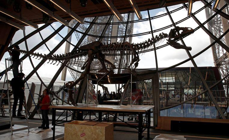 In juni 2018 verkocht het veilinghuis Aguttes in de Eiffeltoren het 150 miljoen jaar oude geraamte voor 2,36 miljoen dollar (2 miljoen euro) aan een anonieme Franse verzamelaar. Hier wordt het skelet opgebouwd, de dag voor de veiling. Beeld Reuters