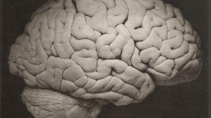 Zo maakte een opstand van 'zombiegenen' ons brein groot